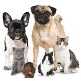 Pets. Group of pets isolated on white Stock Photography