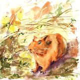 Pets, guinea pig. Drawing with watercolor for the design of the background, print, banner, advertising, ads royalty free illustration