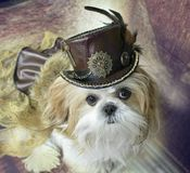 Pets in hats modeling steampunk Royalty Free Stock Photos