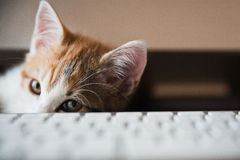 Pets at Home Stock Images