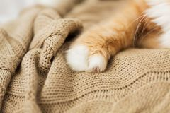 Close up of red cat paw on knitted blanket. Pets and hygge concept - close up of red cat paw on knitted blanket Royalty Free Stock Images