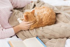 Close up of owner stroking red cat in bed at home royalty free stock photos