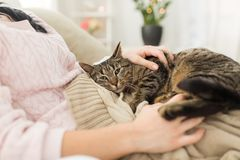 Close up of owner with tabby cat in bed at home royalty free stock photo