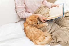 Red cat and female owner reading book at home royalty free stock photography