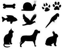 Pets icons. Pet icons used to some purpose of teaching and etc Stock Photography