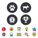 Pets icons. Cat paw with clutches sign. Royalty Free Stock Photography