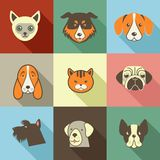 Pets  icons - cats and dogs elements Stock Photography