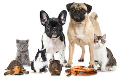 Pets. Idolated on white background Stock Image