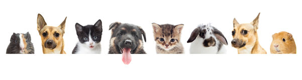 Pets Stock Image