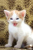 Pets kittens meow Stock Photos