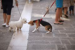 Pets on leashes for a walk with the owners Royalty Free Stock Images