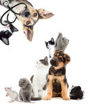 Pets  looking. Pets are looking, Puppy and kitten vet Royalty Free Stock Photos