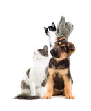 Pets  looking Royalty Free Stock Photos