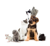 Pets  looking. Pets are looking to the side Royalty Free Stock Photo