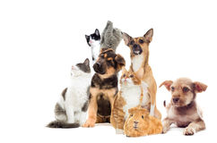 Pets  looking Royalty Free Stock Photo