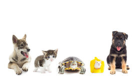 Pets  looking Stock Photo