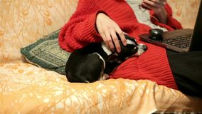 Pets and love for animals. Woman at home in office room chatting and caresses a sleeping chihuahua or toy terrier. Small stock footage