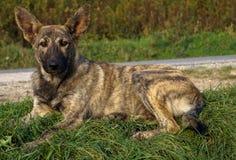 Free Pets Mongrel Stock Photos - 79287203
