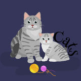 Pets mother cat and kitten sitting white background, domestic animals Stock Photo