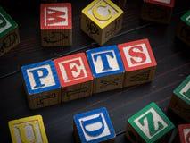 Pets o conceito Foto de Stock