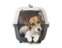 Pets o transporte Fotografia de Stock Royalty Free