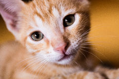 Small kitty looking for love Stock Photos