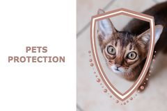 Pets protection concept. Portrait of a kitten and shield illustration. Protection of pets from hunger and cold, from aggression and destruction. Health care stock illustration