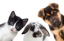 Pets Stock Photos