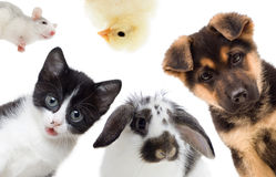 Pets Royalty Free Stock Photos
