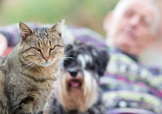 Pets with senior man Royalty Free Stock Photography