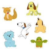 Pets Stock Images