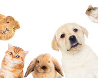 Pets set Royalty Free Stock Images