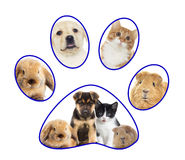 Pets set Royalty Free Stock Photos