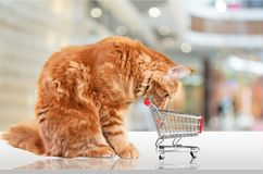 Pets. Shopping cat cart store car cute Royalty Free Stock Photography