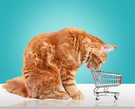 Pets. Shopping cat cart store car cute Stock Photography