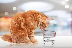 Pets. Shopping cat cart store car cute Stock Image