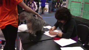 Pets show. Referee checking a cat in pets exhibition in Bucharest stock footage