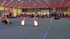 Pets show. Training dog in a pet show in Bucharest stock video