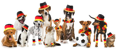 Pets soccer team Stock Photography