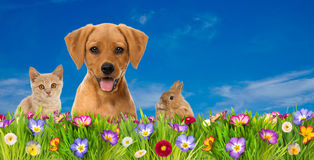 Pets in a spring flower meadow Royalty Free Stock Photo