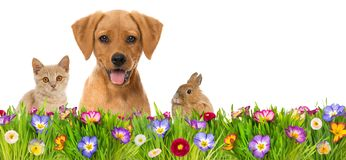 Pets in a spring flower meadow Royalty Free Stock Photography