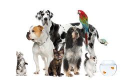 Pets standing in front of white background Stock Photography