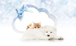 Pets store signboard with cat and dog together cloud shape and b. Lue ribbon bow on christmas lights background blank template and copy space Stock Photography