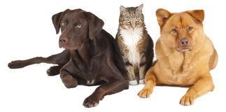 Pets together Stock Image