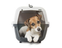 Pets transportation Royalty Free Stock Photography
