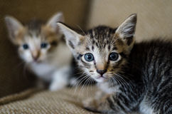 Pets. The two cats. common pet at home Stock Photography