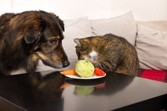 Pets and vegetables Stock Photography