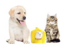 Pets on a white background Stock Photography
