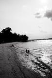 Pettinatura della spiaggia Fotografia Stock