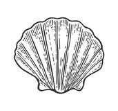 Pettine della conchiglia Illustrazione dell'annata dell'incisione di colore Isolato su priorità bassa bianca royalty illustrazione gratis